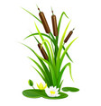 reed bush thicket plant vector image