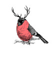 bullfinch with deer horns vector image