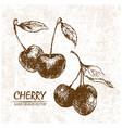 digital detailed cherry hand drawn vector image
