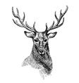 Sketch of deer vector image