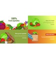 fresh vegetables banner set template cartoon vector image