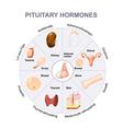 pituitary hormones vector image