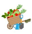 Harvest of fresh vegetables vector image