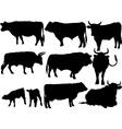 cattle vs vector image