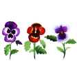 pansies vector image vector image