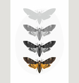 Butterfly Deaths head Hawk moth Set vector image vector image