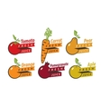 fruits with fresh juice vector image vector image
