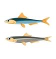 Anchovy Fish Peruvian vector image