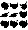 Silhouettes of turkeys vector image vector image