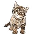 Cat 03 vector image