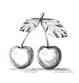 cherry graphics vector image vector image