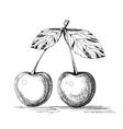 cherry graphics vector image