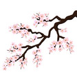branch of sakura or cherry blossoms vector image