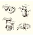 Mushroom set sketch vector image