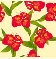 red canna indica - canna lily indian shot on vector image