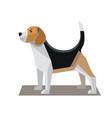 beagle minimalist image vector image