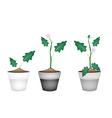 Green Eggplant Tree in Ceramic Flower Pots vector image