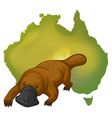 Platypus and Australia map vector image