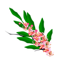 Pink Cassia Fistula Flower on White Background vector image