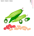Okra or Lady Finger with Vitamin K and C vector image