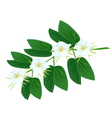 Snowy Orchid Flowers on A White Background vector image