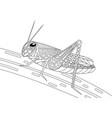 monochrome grasshopper coloring page black over vector image
