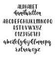 handdrawn latin calligraphy brush script with vector image
