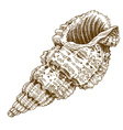 engraving shell vector image