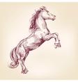 horse llustration vector image