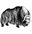 Musk ox vector image vector image