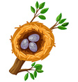 Eggs in bird nest vector image