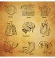 Human organs sketch vector image