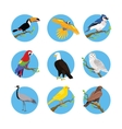 Collection of Various Birds Flat Design vector image