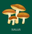 edible mushroom suillus luteus isolated wild vector image