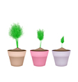 Fresh Green Dill in Ceramic Flower Pots vector image