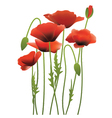 red poppy flowers vector image vector image