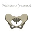 human organ icon in flat style pelvic bones vector image
