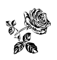 hand drawn roses vector image vector image