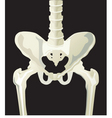 hip x-ray vector image