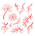 human eye veins red capillaries blood arteries vector image vector image