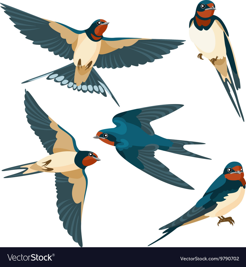 Swallows on white background vector