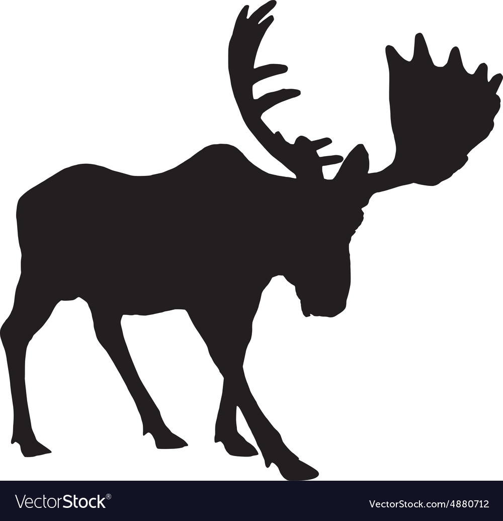 Adult moose vector