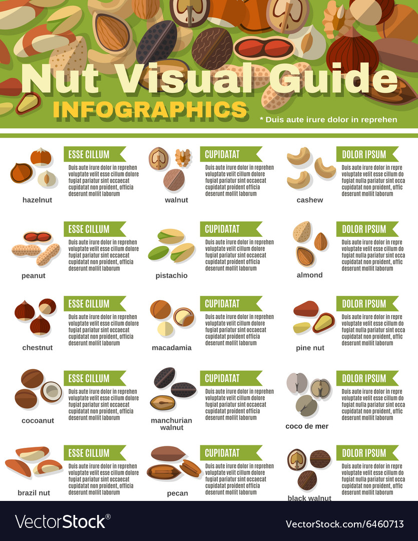 Nuts infographics set vector