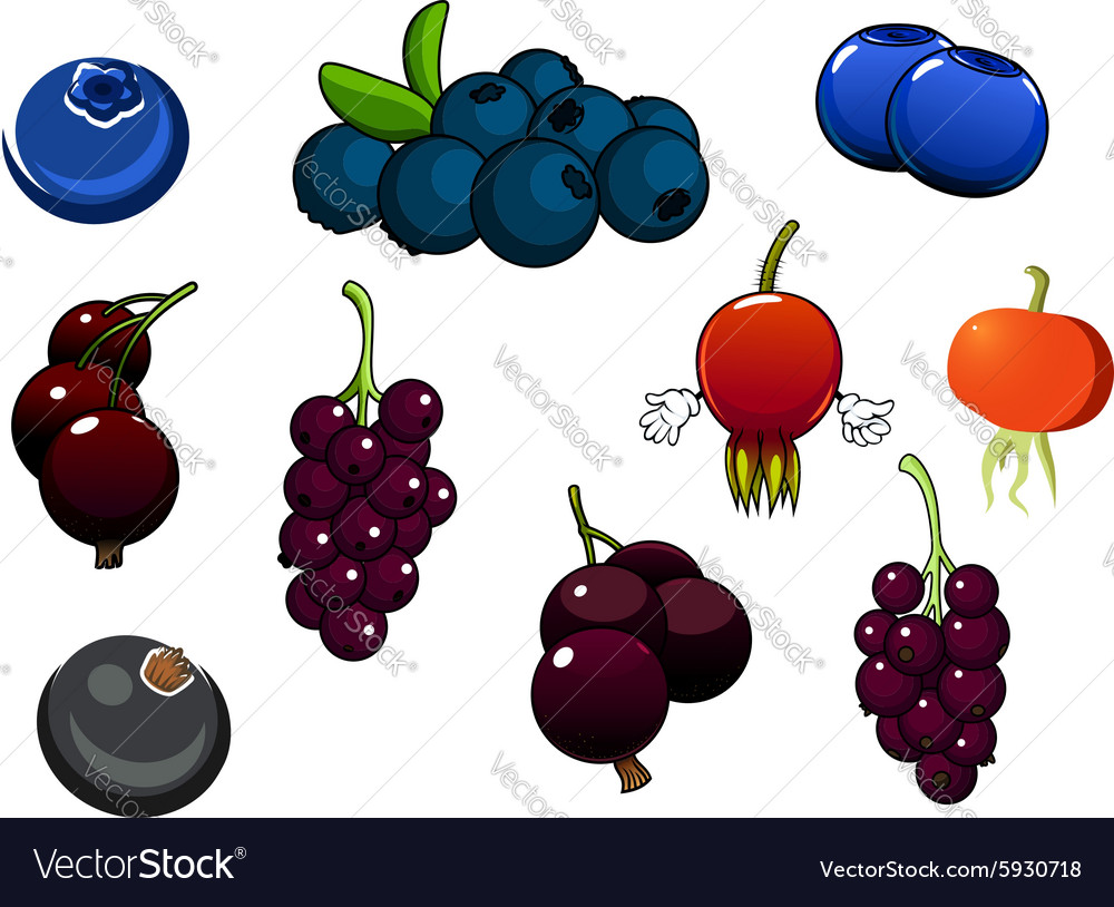 Fresh blueberries blackcurrant and briars fruits vector