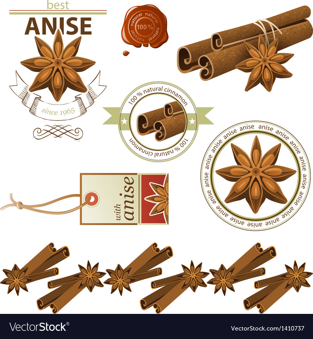Cinnamon and anise vector