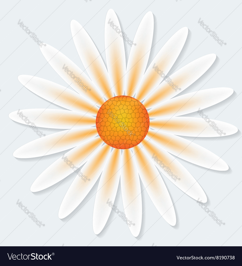 Camomile flower on gray background vector
