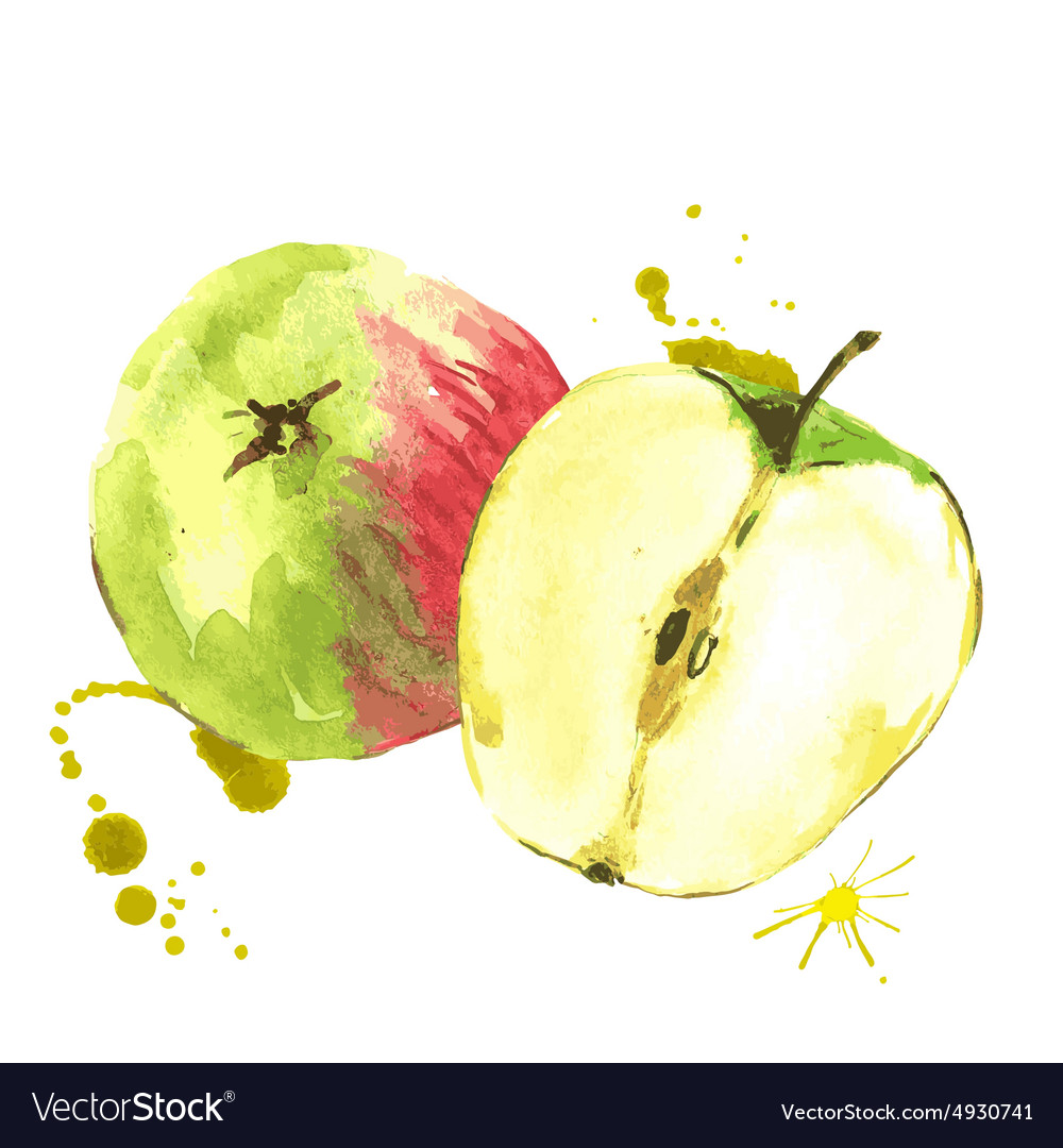 Watercolor apples summer hand drawn fruit vector