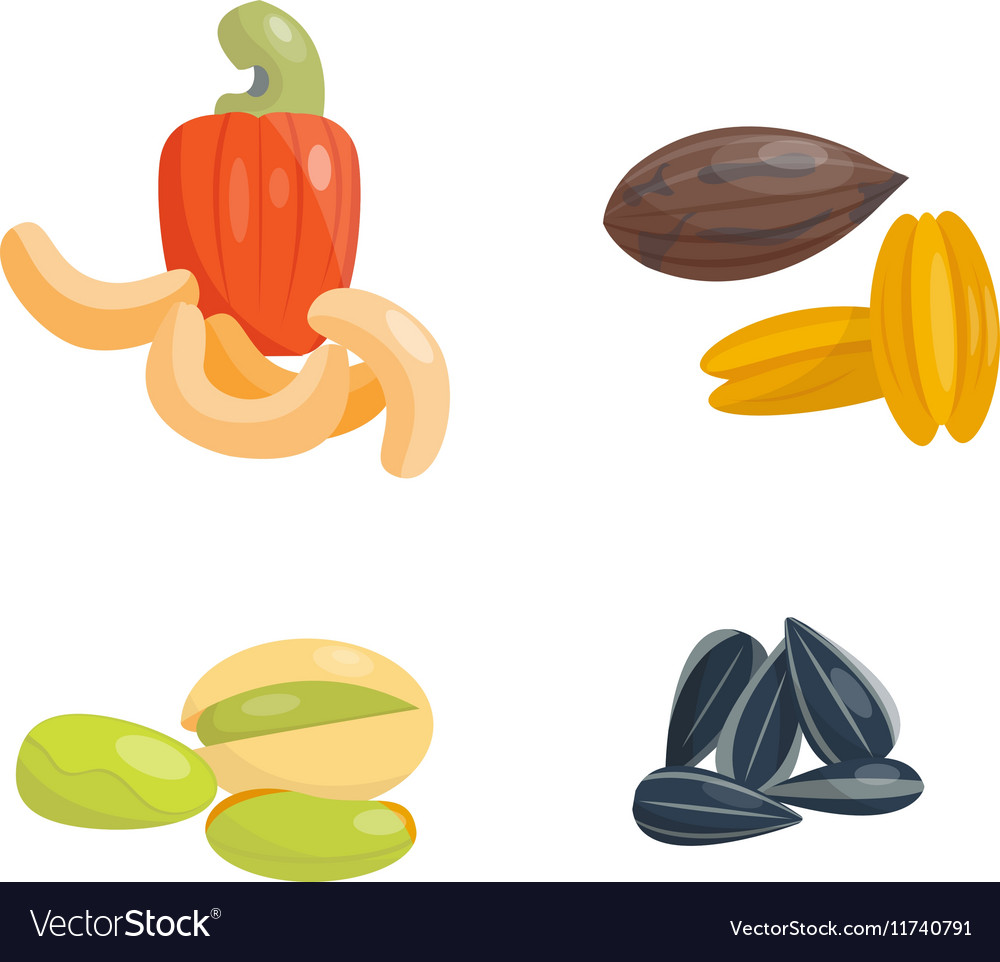 Different nuts set vector