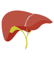 liver vector image