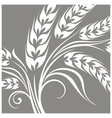 Stylized ears of wheat on grey vector image vector image